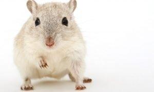 Dromen over muizen: Droom betekenis, Symbolen