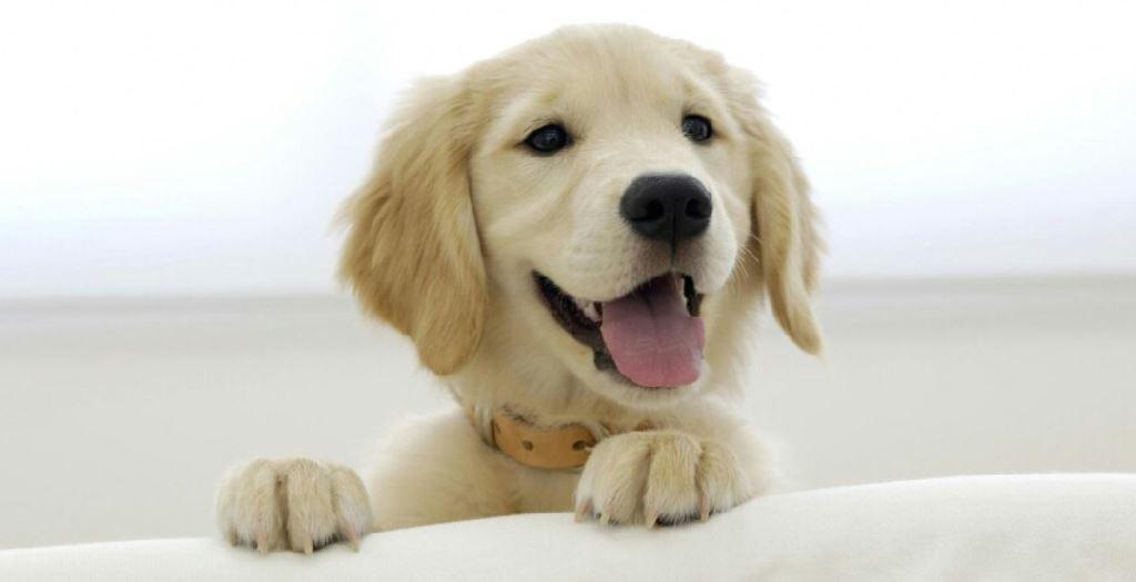 Dromen van een hond - Wat betekent het?