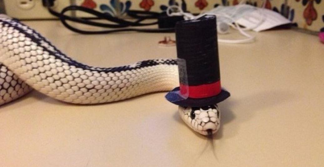 Dromen over slangenbeet: Droom betekenis, Symbolen