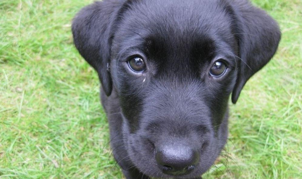 Dromen over zwarte hond: Droom betekenis, Symbolen