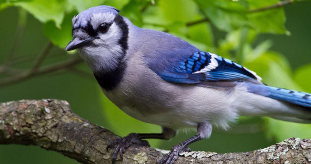 Dromen over vogels: Droom betekenis, Symbolen