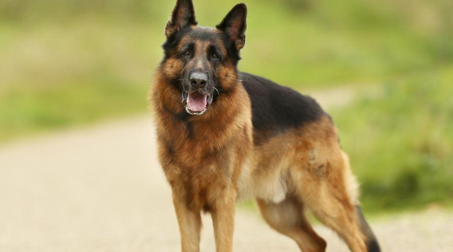 Dromen over honden: Droom betekenis, Symbolen