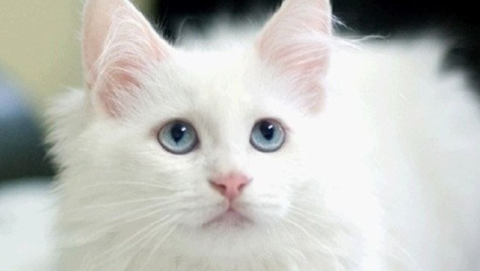 Dromen over katten: Droom betekenis, Symbolen