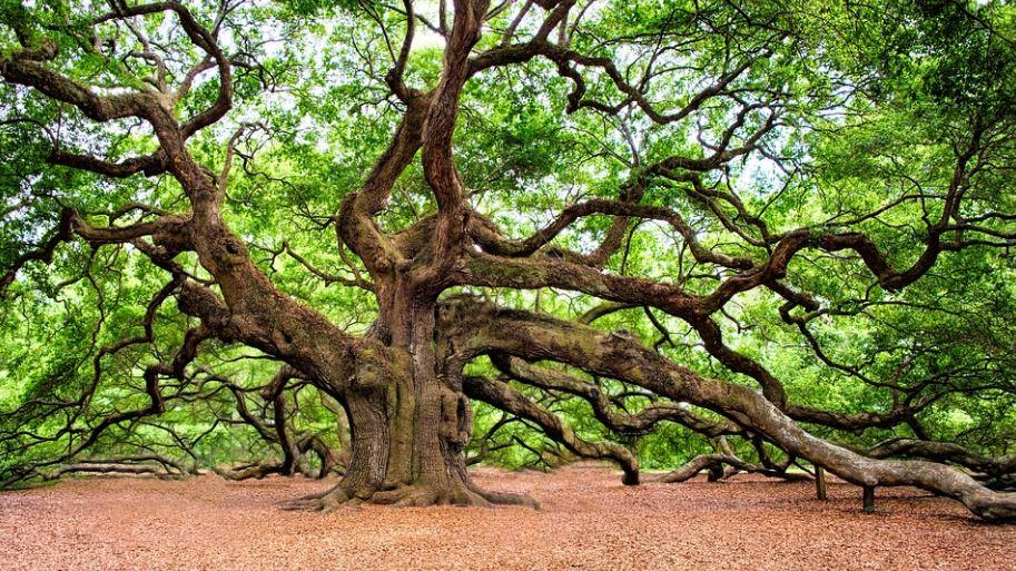 Dromen over bomen: Droom betekenis, Symbolen