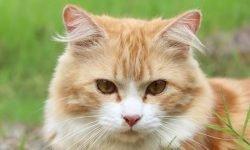 Dromen over katten: Wat betekent dat?