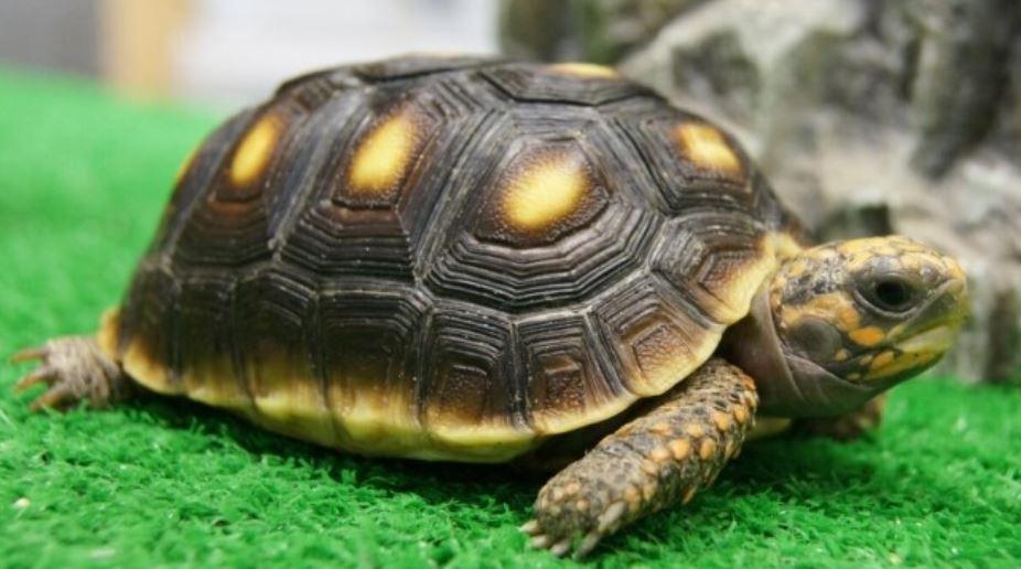 Dromen Over Schildpad Droom Betekenis Symbolen