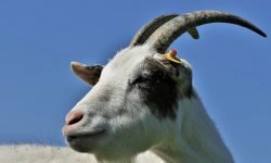 Steenbok planeet: Sterrenbeelden en Horoscoop