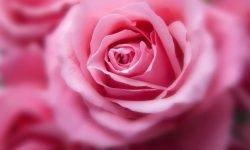 Liefdeshoroscoop kreeft: Sterrenbeelden en Horoscoop