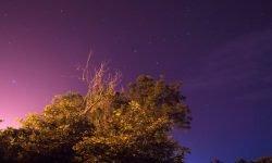 Horoscoop: 23 januari sterrenbeeld