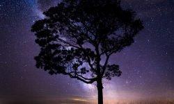 Horoscoop: 21 februari sterrenbeeld