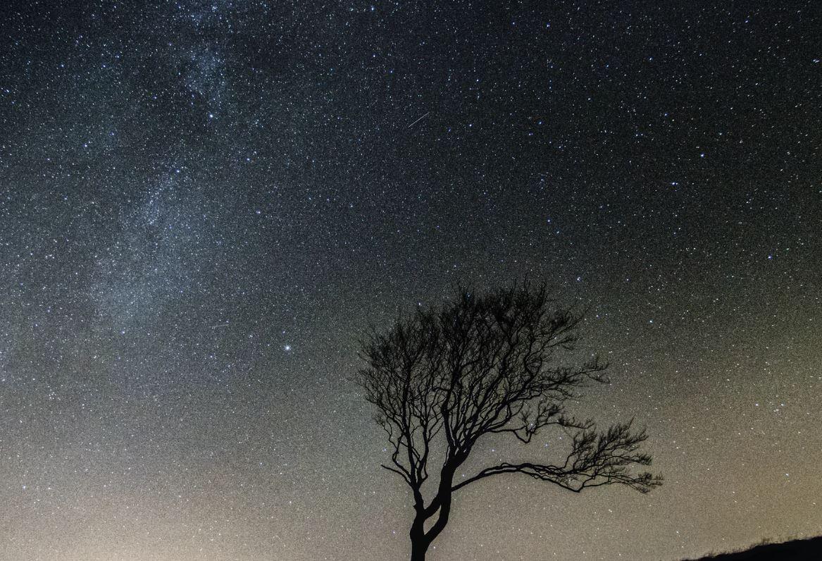 12 maart sterrenbeeld