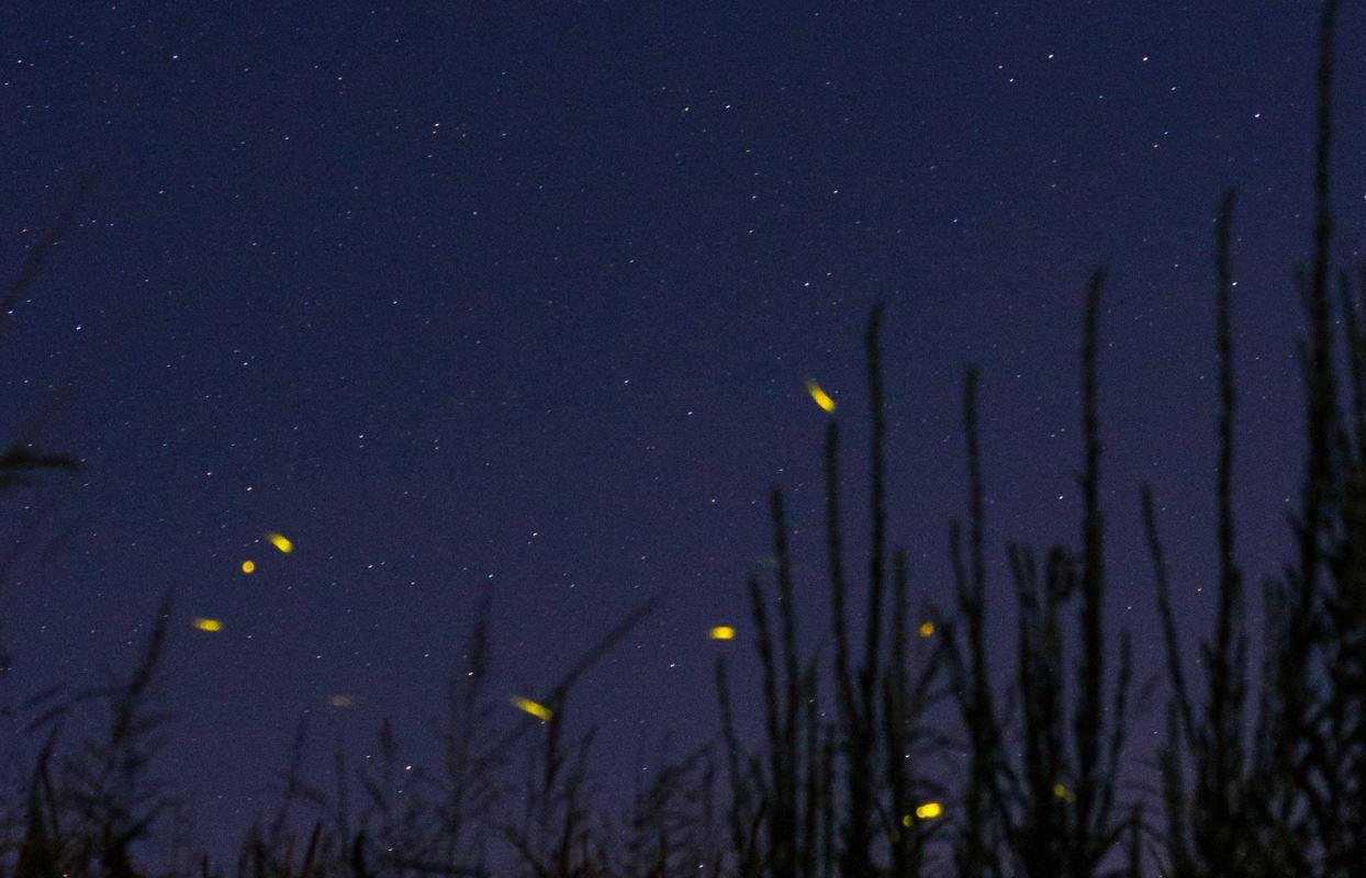 1 juli sterrenbeeld