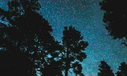 Horoscoop: 4 augustus sterrenbeeld