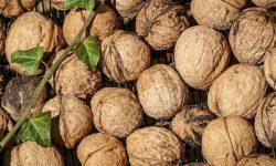 Waarom zijn walnoten gezond? Lees hier de 15 voordelen