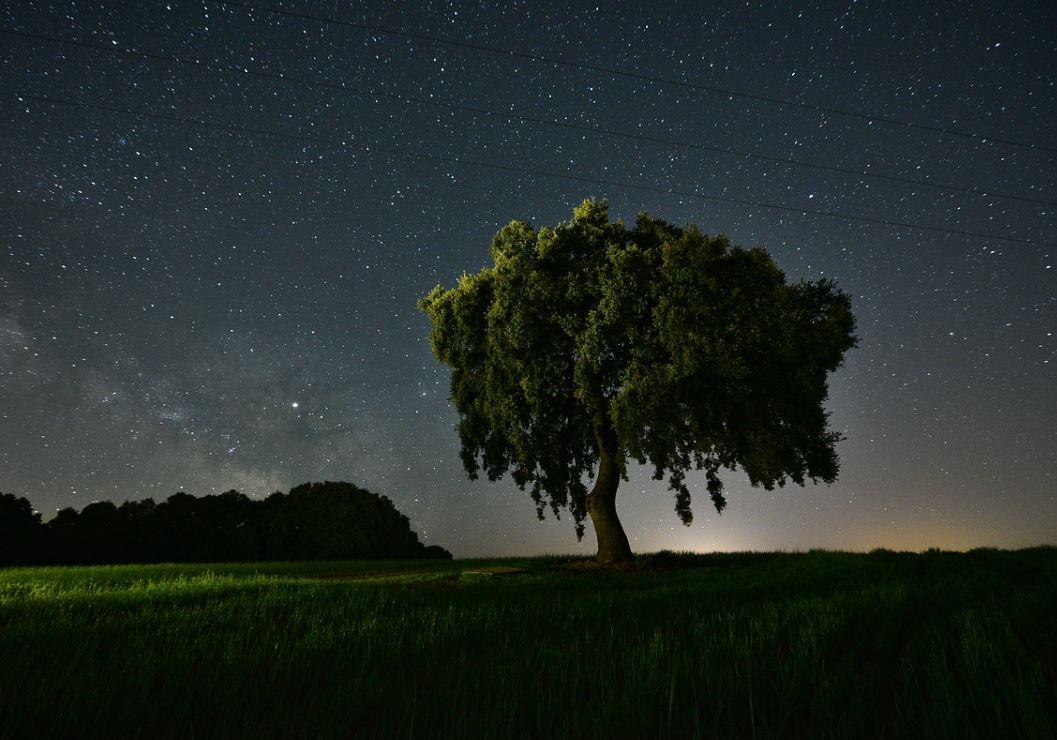 20 november sterrenbeeld