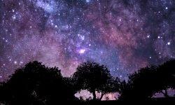 Horoscoop: 2 december sterrenbeeld