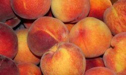 Waarom zijn perziken gezond? Lees hier de 19 voordelen