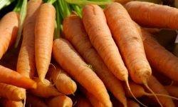 Zijn wortels gezond? Lees hier de 17 voordelen