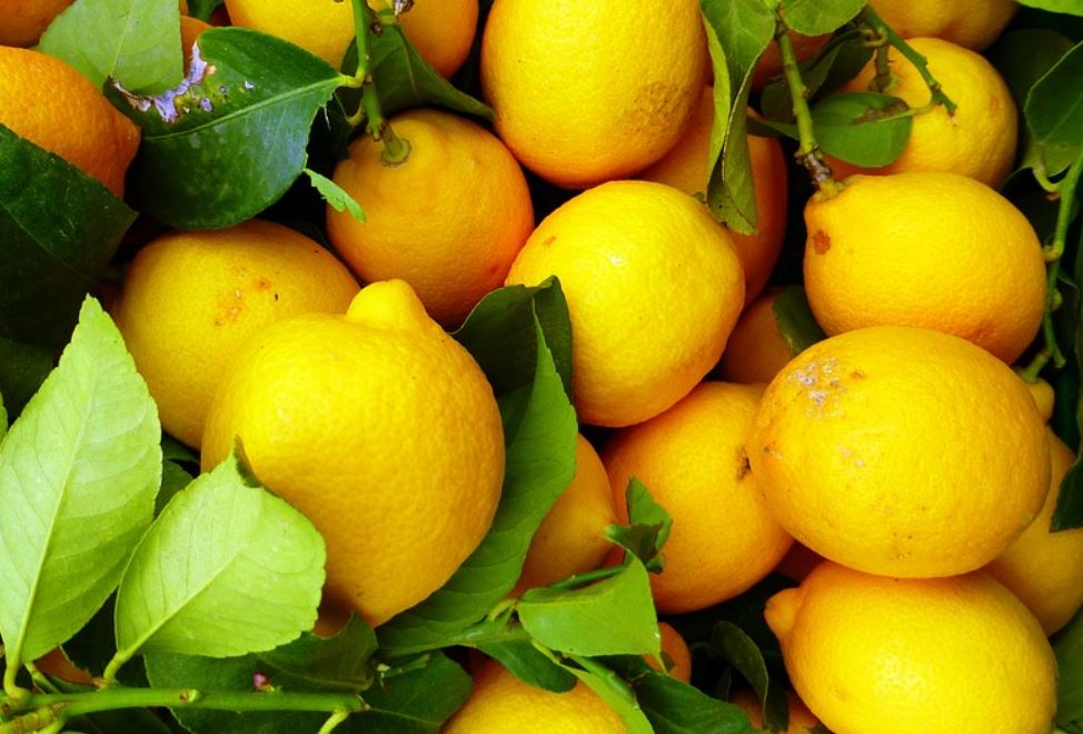 Is citroen gezond