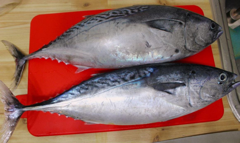 Is tonijn gezond