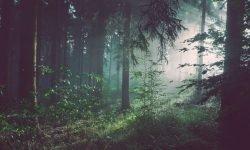 Dromen over bos, wat betekent dat?