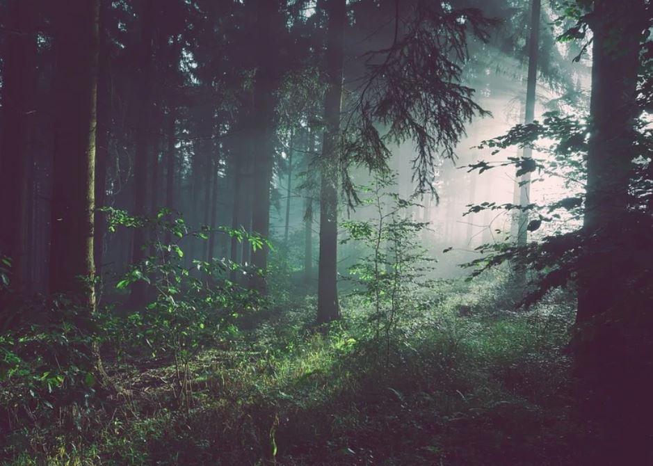 Dromen over bos