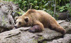 Dromen over beer, wat betekent dat?