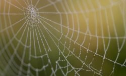 Dromen over spinnenweb: Wat betekent dat?