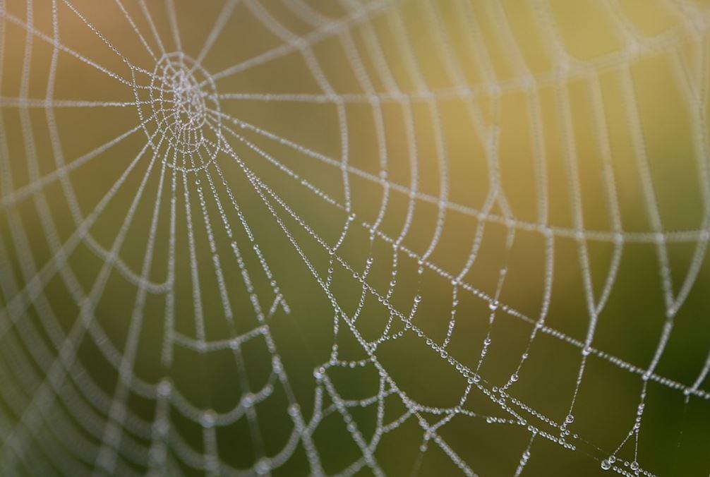 Dromen over spinnenweb